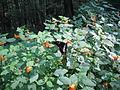 Black Moshannon State Park butterfly.jpg