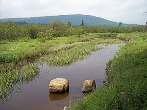 Canaan Valley - The Blackwater River near Canaan Valley Resort State Park