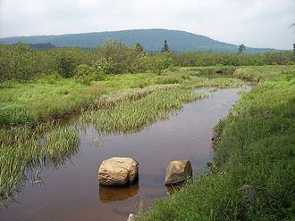 Blackwater River (West Virginia) - Image: Blackwater River Canaan Valley Resort State Park
