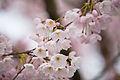Bloom (2405134122).jpg