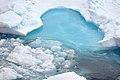 Blue Ice (4370262011).jpg