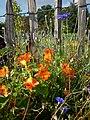 Blumen am Gartenzaun – Arboretum Ellerhoop 6.jpg