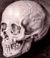 Blumenbach Caucasus skull.png