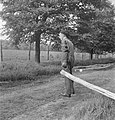 Bosbewerking, arbeiders, boomstammen, Bestanddeelnr 251-7399.jpg