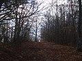 Bosco del monte Camurcina in tardo autunno - panoramio.jpg