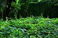 Bosque de La Habana 20.jpg