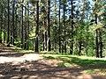 Bosque de Oma (16).JPG