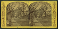 Boston Common, from Robert N. Dennis collection of stereoscopic views 7.png