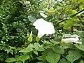 Botanical garden (Zugdidi17).jpg