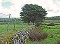 Boundary of the moorland, Blaenffynnon, Meline - geograph.org.uk - 919019.jpg