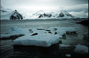 Bourgeois Fjord seals on ice floe