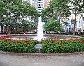 Bowling Green geraniums jeh.JPG