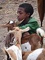 Boy with Goats - Saturday Market - Lalibela - Ethiopia (8727447259).jpg