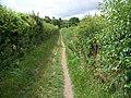 Bridleway, Badbury Rings - geograph.org.uk - 1437930.jpg
