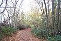 Bridleway, Tinley Lodge Toll - geograph.org.uk - 1576114.jpg