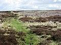 Bridleway east of Rebel Hill - geograph.org.uk - 416118.jpg