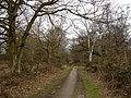Bridleway through the woods - geograph.org.uk - 1219407.jpg