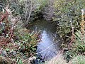 Brook in the middle of the wood - Oct 2014 - panoramio.jpg