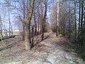 Bryansky District, Bryansk Oblast, Russia - panoramio (181).jpg