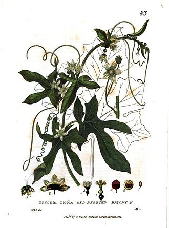 William Baxter (Oxford Botanic Garden curator) - Bryonia dioica Jacq.