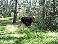Bunkier w lesie koło Ząbkowic - panoramio.jpg