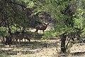 Buritas en Sonora - panoramio.jpg