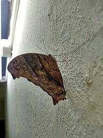 Butterfly hostel 03.jpg