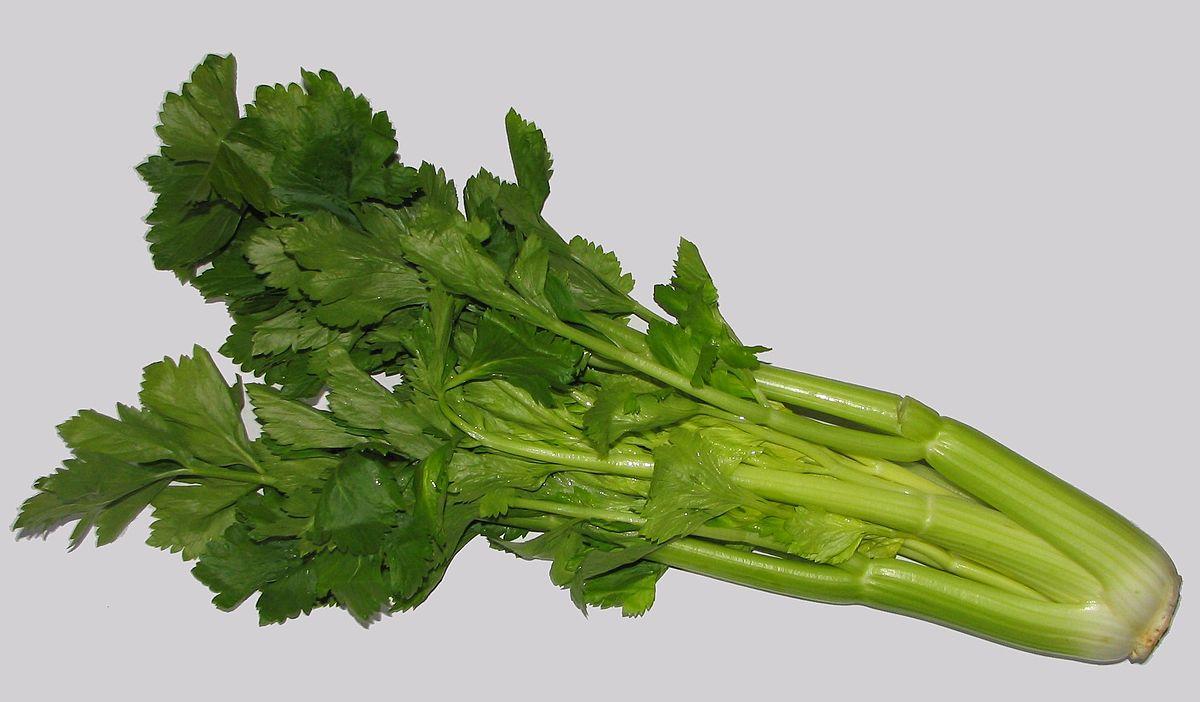 celery - Wiktionary