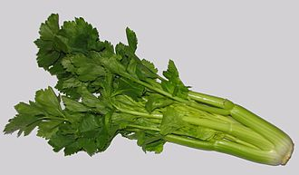 Celery - Head of celery, sold as a vegetable. Usually only the leaf stalks are eaten