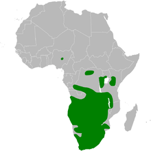 Map showing the distribution in Africa