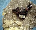 Calcite-Sphalerite-Quartz-231668.jpg