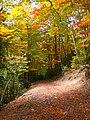 Camí de Cavalls del Vent entre Coll de Bauma i Gresolet (octubre 2011) - panoramio (1).jpg