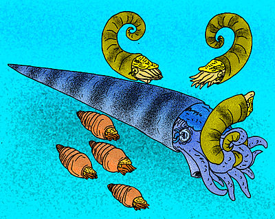 An illustration of a variety of fossil nautiloids. Cameroceras trentonese.jpg