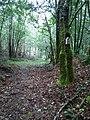 Camino entre Trabadela y Marcenlos.jpg