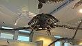 Canadian Museum of Nature, McLeod St, Ottawa (492039) (9447771041).jpg