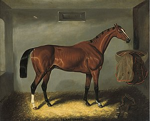 Caractacus (horse) - Caractacus as painted by Samuel Spode.