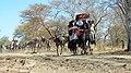 Caravane des nomades6.jpg