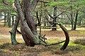 Carnikava - panoramio (3).jpg