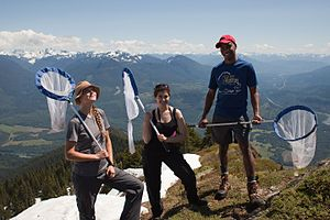 Citizen science - Members of the Cascades Butterfly Citizen Science Team pictured on Sauk mountain