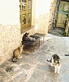 Castelmola cat colony 14-9-21.jpg