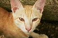 Cat public domain dedication image 0008.jpg