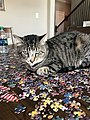 Cat sitting on a puzzle.jpg