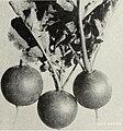 Catalog - spring 1959 (1959) (20549858586).jpg