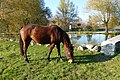 Cavallo al pascolo a Juvanum - panoramio.jpg