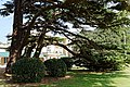 Cedar lawn south front Quex House Birchington Kent England.jpg