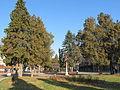 Centar Varvarina.jpg
