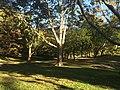 Central Park, New York, NY, USA - panoramio (178).jpg