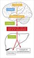 Cerebrosterol dibuix.png