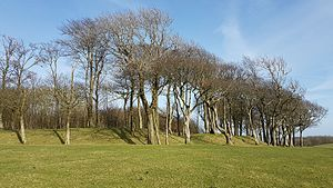 Chanctonbury Ring - View of the south-west quadrant of Chanctonbury Ring, showing the bank and south-western entrance (not part of the original structure)