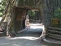 Chandelier Tree - John Fink.jpg
